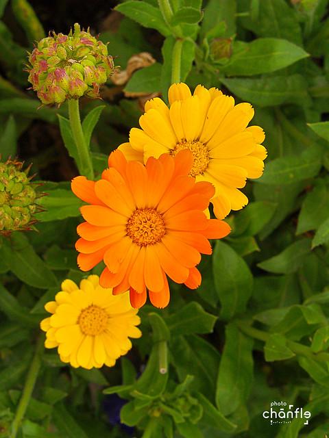Flores en el jardín botánico