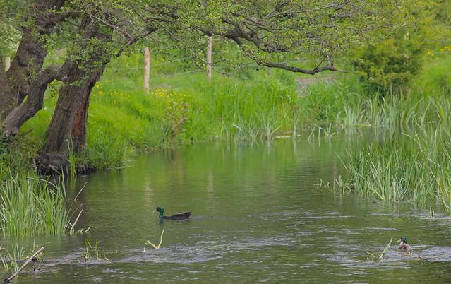 River Darent Kent..