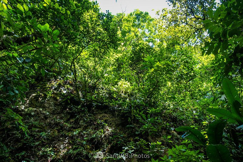 Selva de la Catarata Río Fortuna