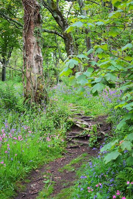 Path through the fairy woods