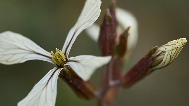 Otra flor con otro proyecto de flor en Fauna y flora49912825288_1452fd57df_c