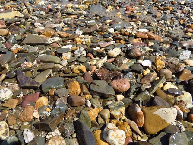 Steine und Muscheln am Rheinufer bei Brey