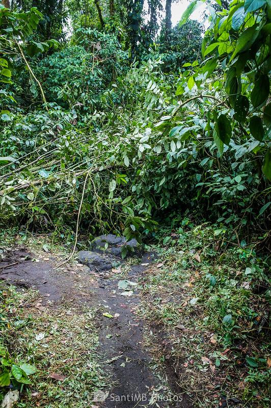 Árbol caído en el Sendero del Ceibo
