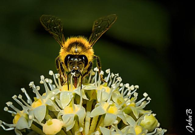 Bee and the Coronavirus flower