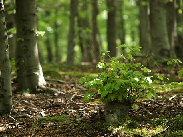 Neues aus dem Wald