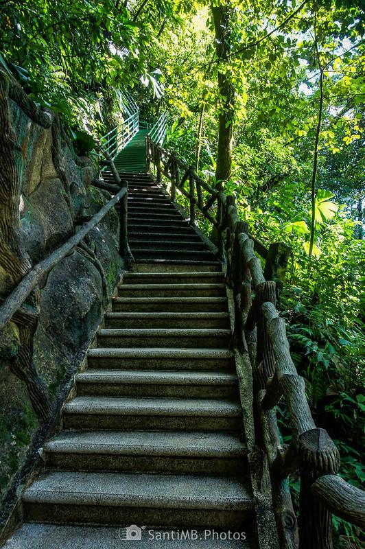 Escaleras del camino de la Catarata Río Fortuna