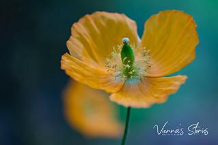 Yellow Flower!🌼