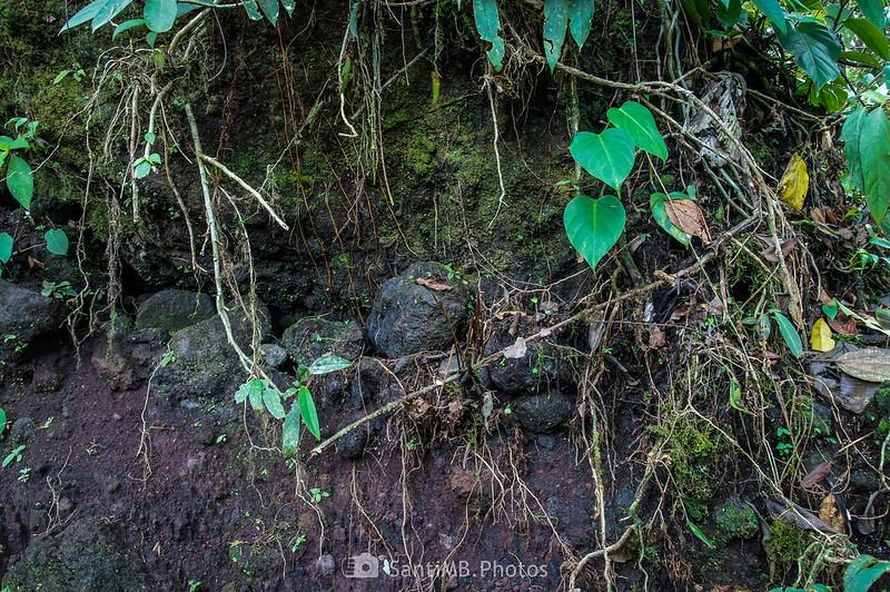 Detalle del suelo volcánico en la colada de 1992 del Volcán Arenal