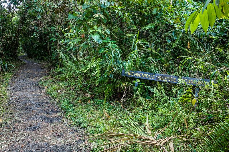 Entrada al bosque secundario del Sendero de las Coladas del Volcán Arenal