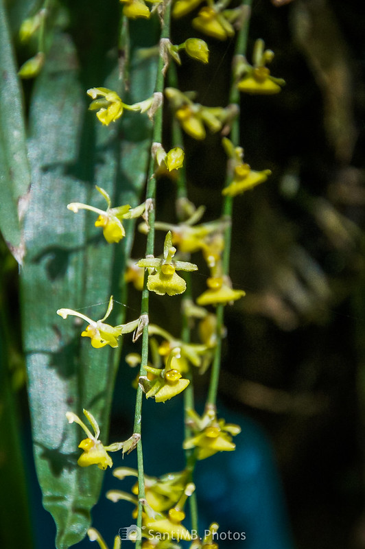 Jardín de Orquídeas de la Catarata Río Fortuna