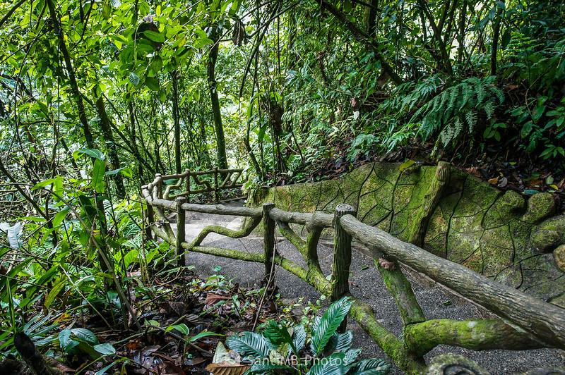 Tramo de escaleras hacia la Catarata Río Fortuna