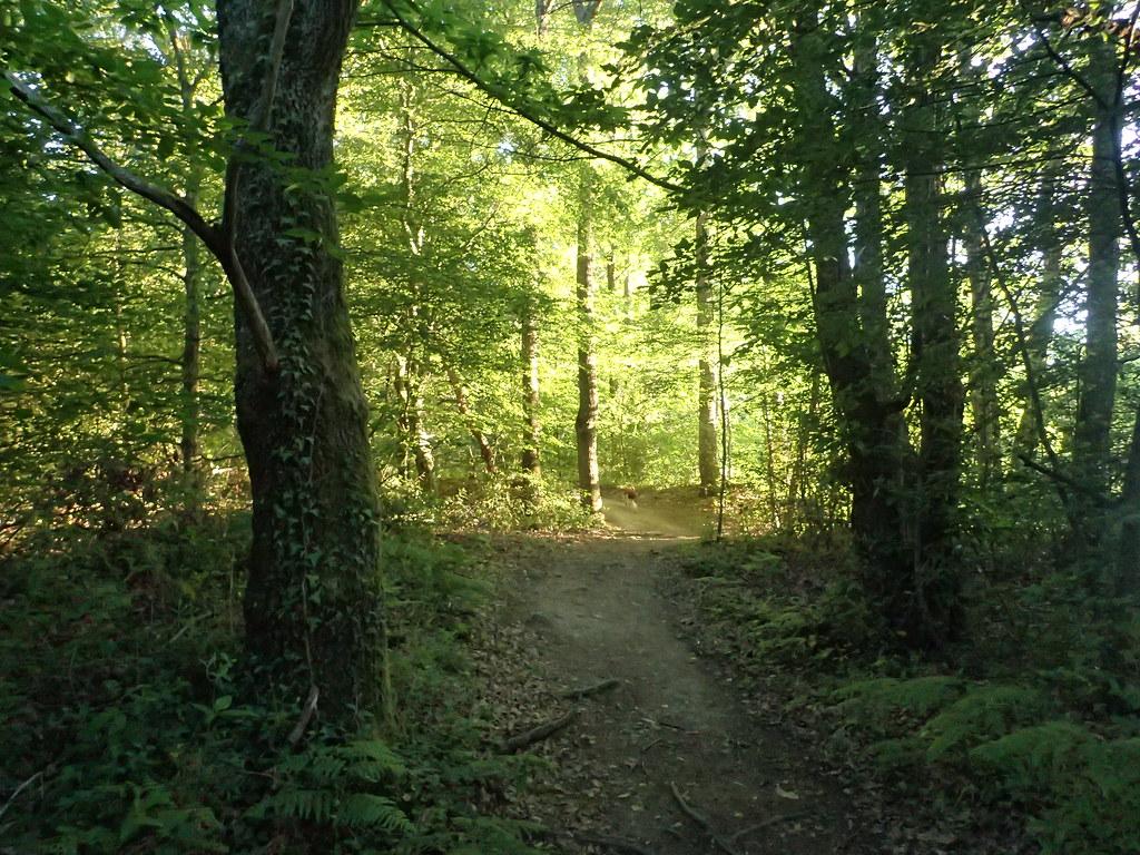 Le soir en forêt