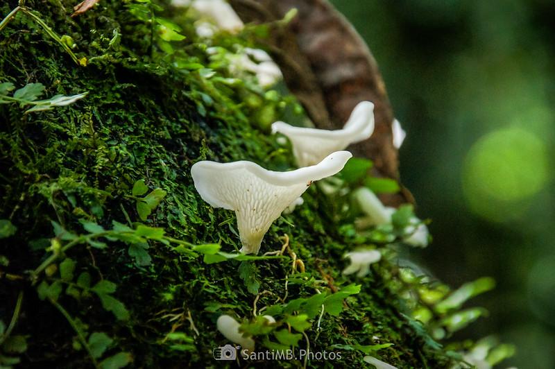 Hongos sobre musgo en tronco de un árbol en el Sendero del Ceibo