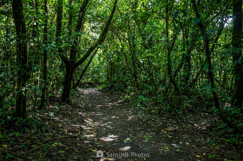 Bosque secundario en el Sendero de las Coladas del Volcán Arenal