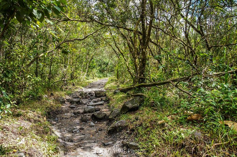 Pequeño árbol caído en el Sendero de las Coladas del Volcán Arenal