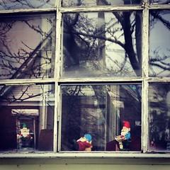 self-isolatiing garden gnomes