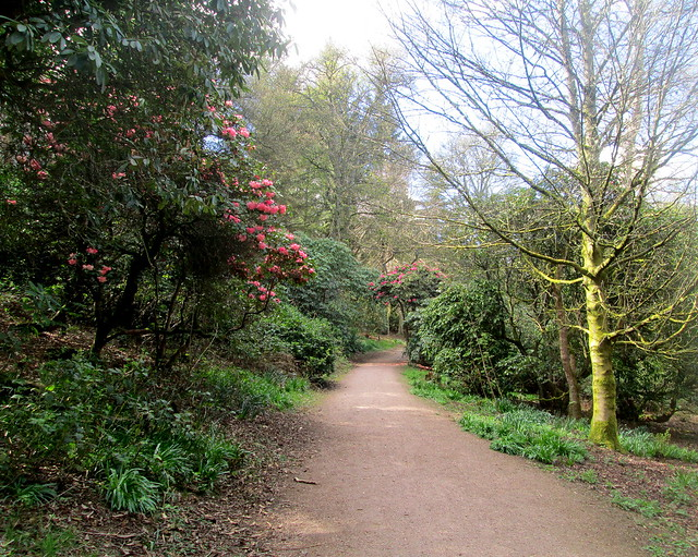 Balbirnie Path and rhoddies