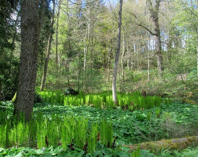 Ferns, Balbirnie, Fife