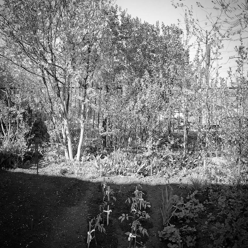 Огород Май
