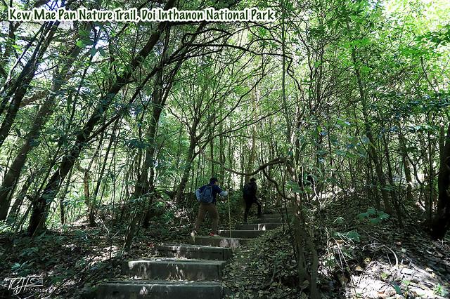 Kew Mae Pan Nature Trail Doi Inthanon National Park