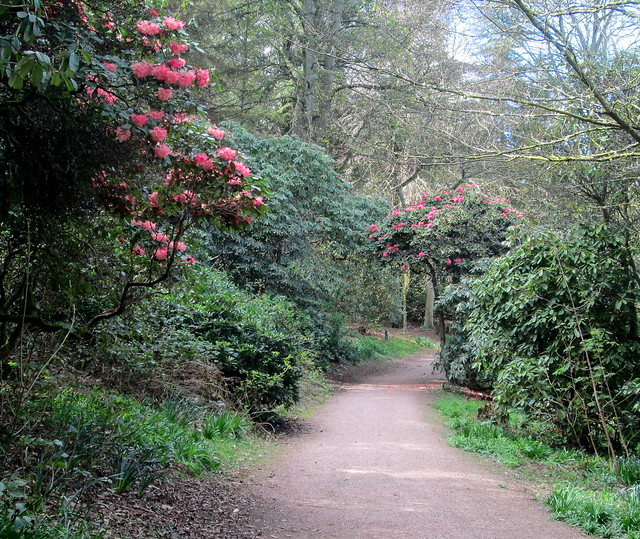Balbirnie Path and rhoddies, Markinch, Fife
