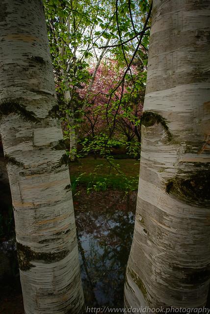 Kariya Gardens