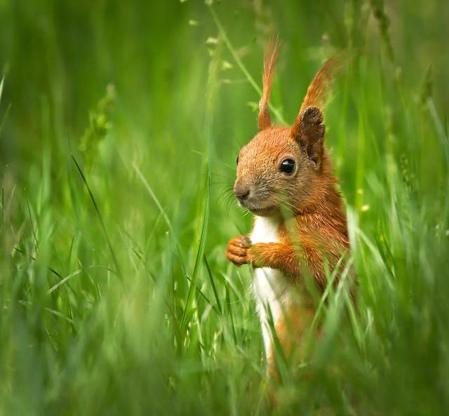 Hiding in grass