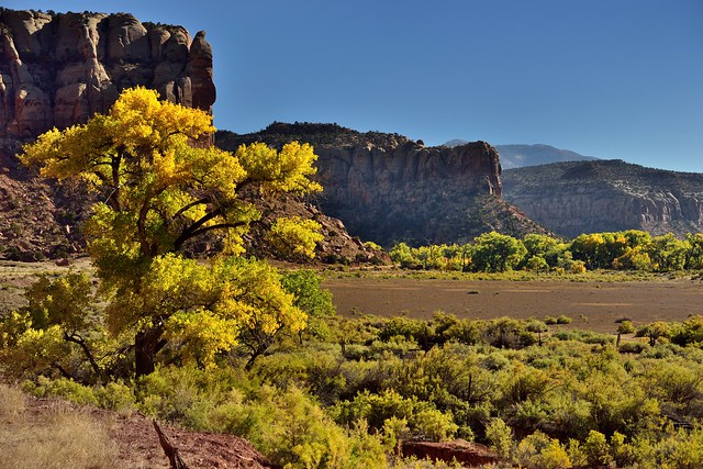 A Lone Tree and then Towering Mesas off in the Distance (Bears Ears National Monument)