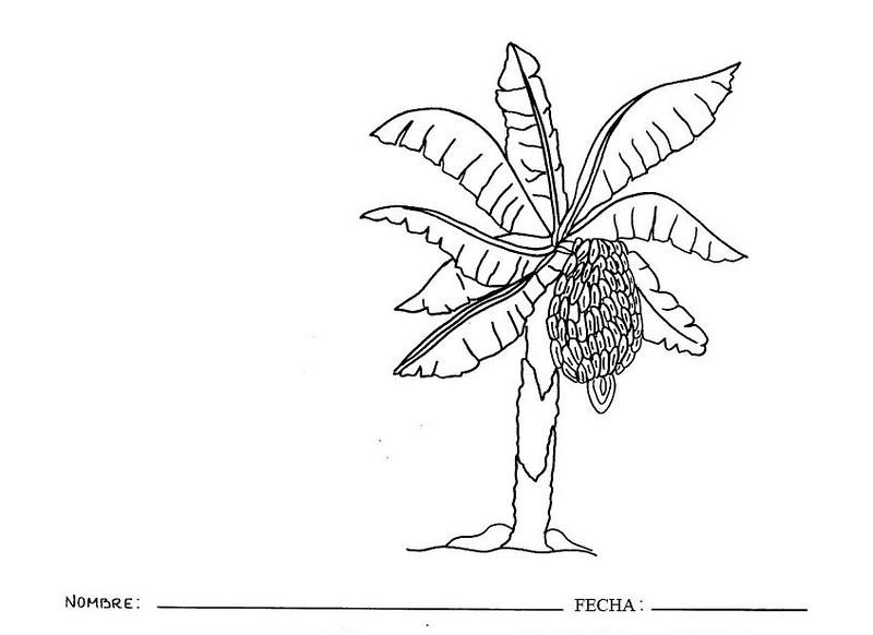 Plantas Platanera