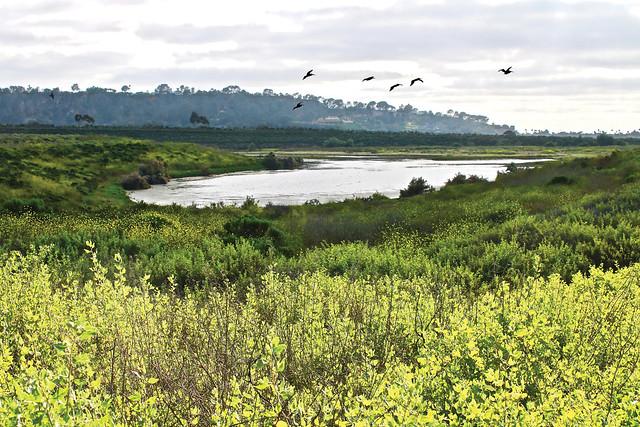 San Dieguito River Park Pond