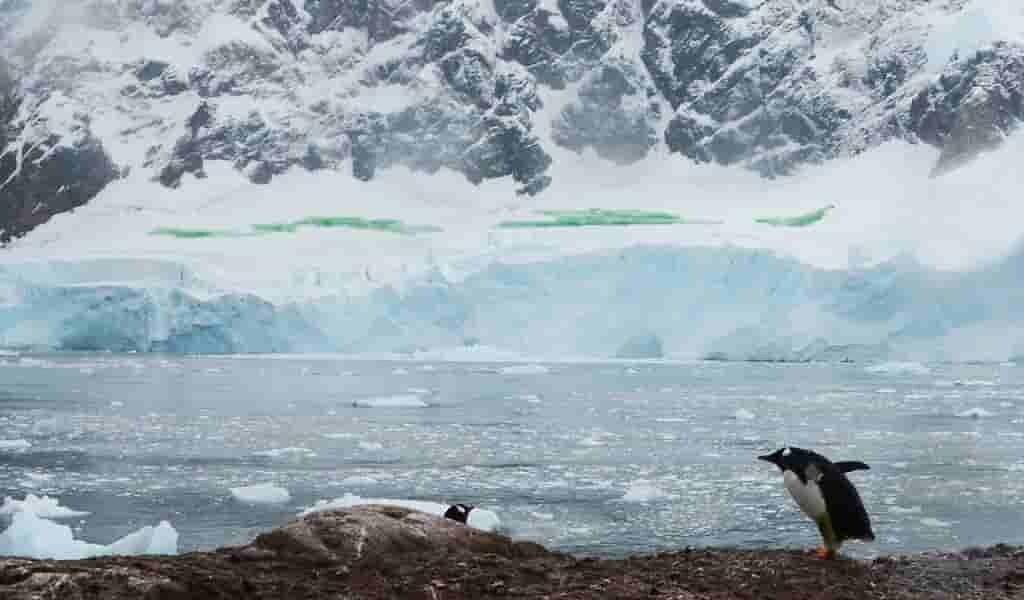 des-algues-en-Antarctique-à-cause-du-changement-climatique