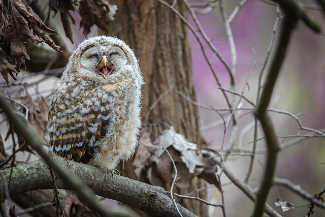 """Did you hear the one about the Owl Magician?... they called him """"Hooo-Dini""""!... 😜"""