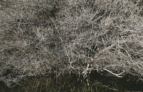 blackandwhite tree reflection complicated cross