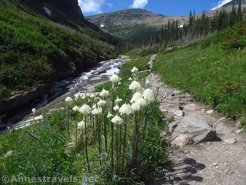 Near the Piegan Pass Trailhead, Glacier National Park, Montana