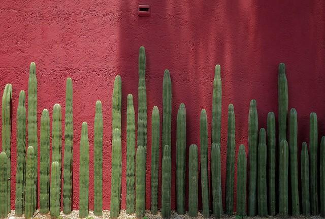 Pared.  Wall.  Ciudad de México.