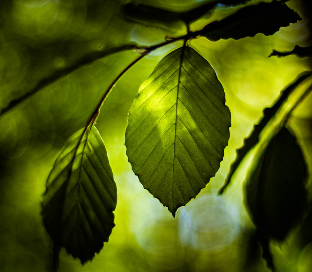 Leaf with strong emotions