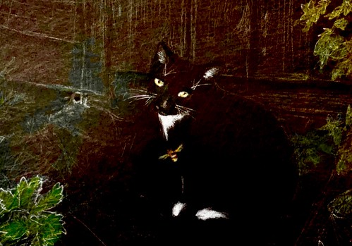 Stage 2 of 2. Jenkins watching the Bumble Bees coming and going, by their Nest. Coloured pencil drawing on black card by jmsw.