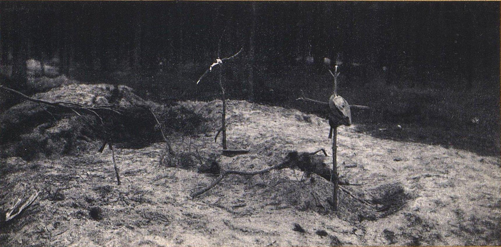 39. Могилы солдат в Сенкоцинском лесу