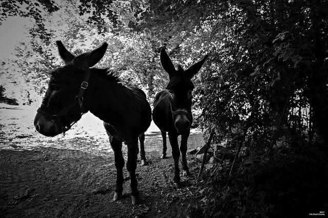De profil ou de face, un âne reste un âne !