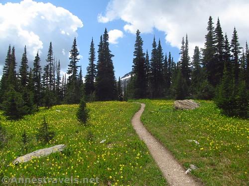 The Siyeh Pass Trail through the glacier lilies in Preston Park, Glacier National Park, Montana