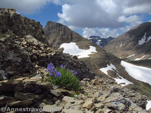 Views from the north side of the ridge back toward Siyeh Pass, Matahpi Peak, Pollock Mountain, and Mount Siyeh, Glacier National Park, Montana