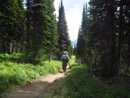 Hiking through the forest (in the afternoon) on the Siyeh Pass Trail / Piegan Pass Trail, Glacier National Park, Montana