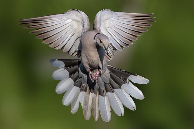 I am the Angel! -