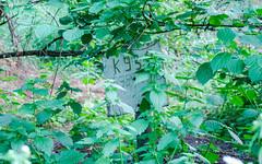 Кладбище домашних животных, Бельцы, Республика Молдова / Cimitirul animalelor, Balti, Republica Moldova / Pet cemetery, Balti, Republic of Moldova