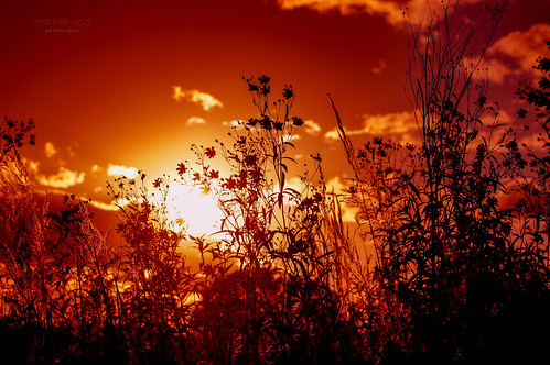 summer meadow sky clouds plants backlight silhouettes sun sunset evening nature