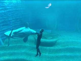 Sanya Atlantis Hotel Aquarium 7 | by China Cetacean Alliance