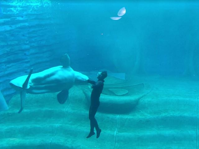 Sanya Atlantis Hotel Aquarium 7