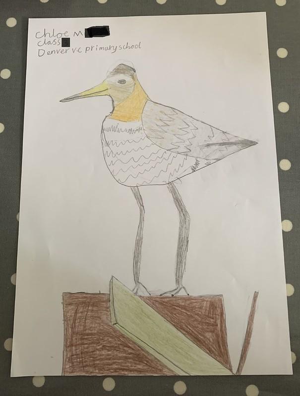 Godwit by Chloe of Denver Primary School