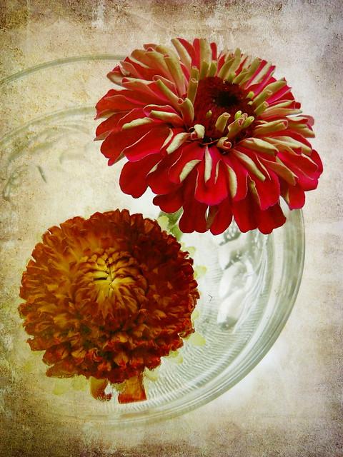 Flowers 1/3