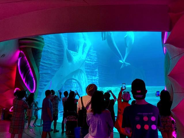 Sanya Atlantis Hotel Aquarium 8